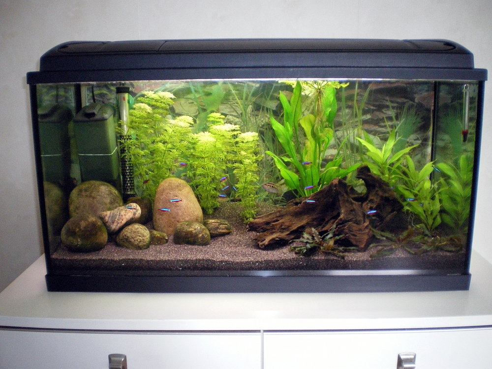 Sa Biotop Akvarie