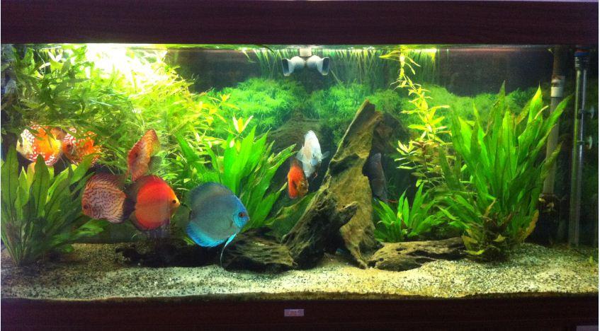 luftpump akvarium