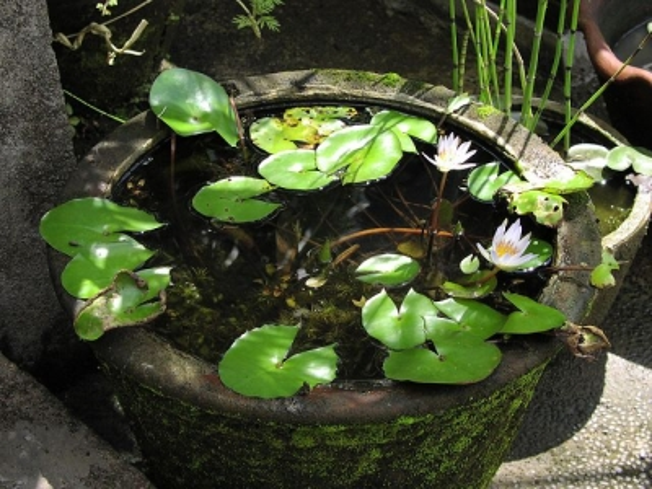 Zoopet vattenkrukan ett akvarium som f r plats var som for Laghetto pesci rossi e tartarughe