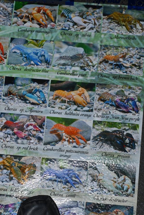 Zoopet zierfische aquarium cichliden tage 2007 for Zierfische hannover