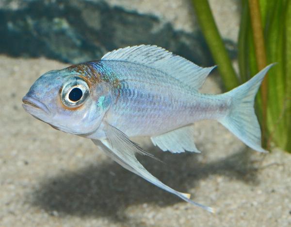 Zoopet zierfische aquarium cichliden tage 2007 for Aquarium zierfische