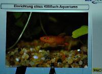 AC-F_redrag_-_Barbara_Klingbeil20.JPG