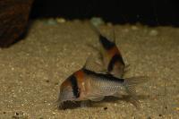 C-M_ndag-Aquariumgrotte-0713.jpg