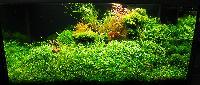 AA_Planted_Aquarium_01_DSC_0302.jpg