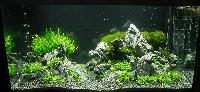AA_Planted_Aquarium_22_DSC_0338.jpg
