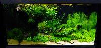 AA_Planted_Aquarium_29_DSC_0362.jpg