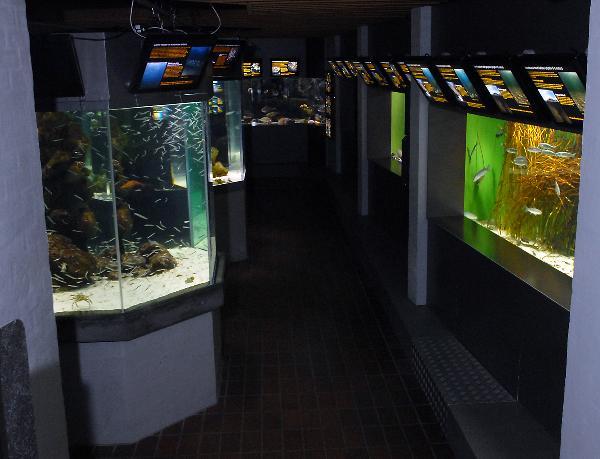 Öresundsakvariet