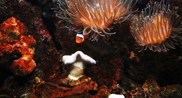 Sea Life, Oberhausen