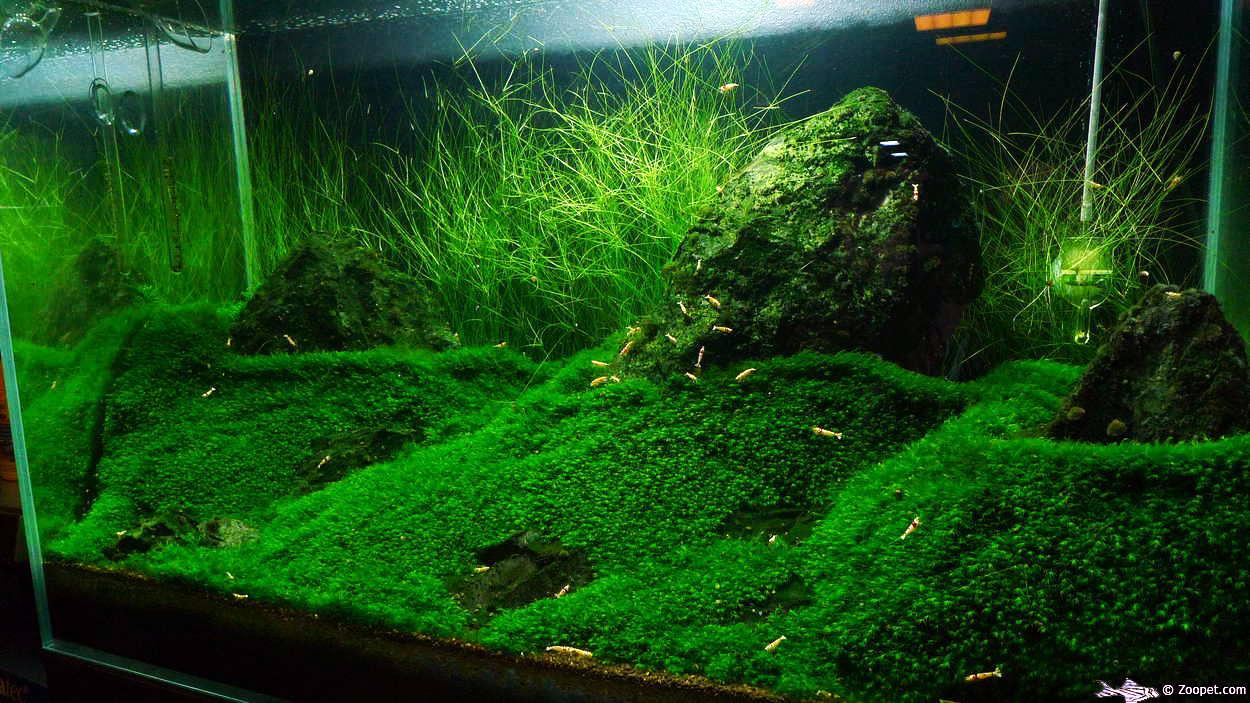 zoopet planted aquarium resa 2011. Black Bedroom Furniture Sets. Home Design Ideas