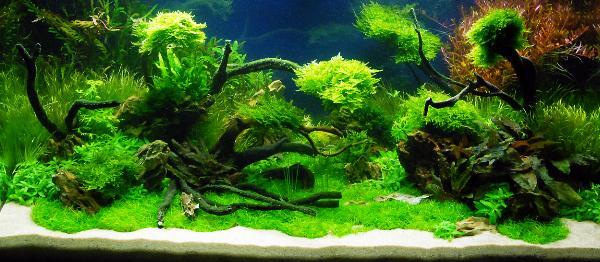 PL.A. Planted Aquarium 03