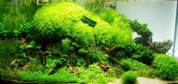 PL.A. Planted Aquarium 05