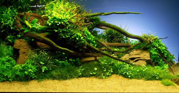 PL.A. Planted Aquarium 07