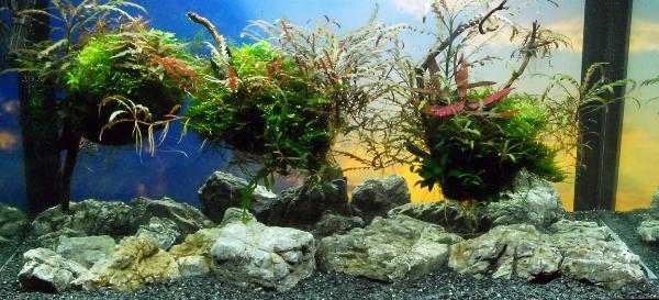PL.A. Planted Aquarium 18