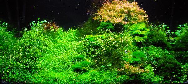 PL.A. Planted Aquarium 19