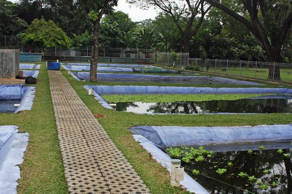 Taman Akuarium Air Tawar, Jakarta, Indonesien