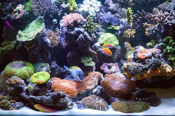 Aquarama 2011