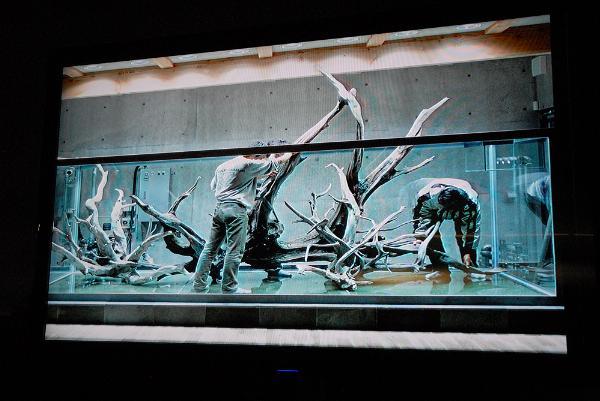 Akvarieutställning, Aarhus, Danmark, 2011