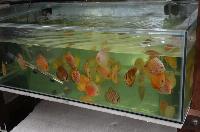 Farmtur_8_13_Sanyo_Aquarium_DSC_8762.JPG