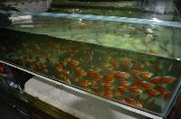 Farmtur_8_14_Sanyo_Aquarium_DSC_8766.JPG