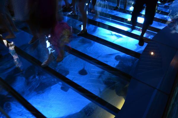 S.E.A. Aquarium, Marine Life