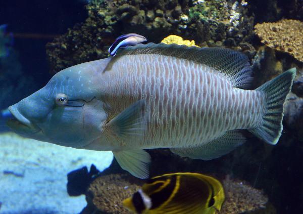 Barcelona Akvarium