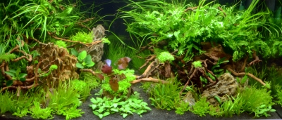Aquascaping 250 liter