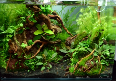 Aquascaping 35 liter