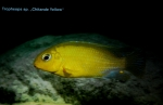 A_L_rdag_Andreas_Spreinat_Dive_sites_at_the_westc_oast_DSC_0227.jpg