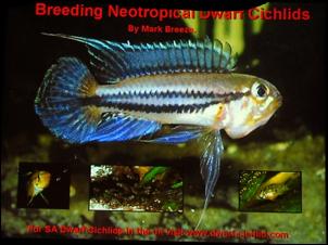 https://www.zoopet.com/bilder/data/697/medium/003_Breeze_Apistogramma_breeding_0062.jpg