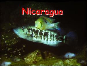 https://www.zoopet.com/bilder/data/697/medium/004_Heijns_Nicaragua_0096.jpg