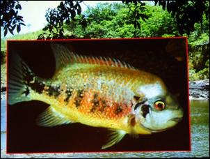 https://www.zoopet.com/bilder/data/697/medium/004_Heijns_Nicaragua_0125.jpg