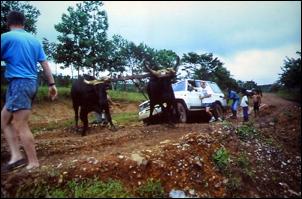 https://www.zoopet.com/bilder/data/697/medium/004_Heijns_Nicaragua_0127.jpg