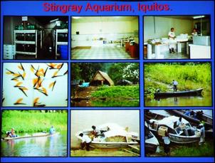 https://www.zoopet.com/bilder/data/697/medium/006_Breeze_Collecting_Apistogramma_Peru_0185.jpg